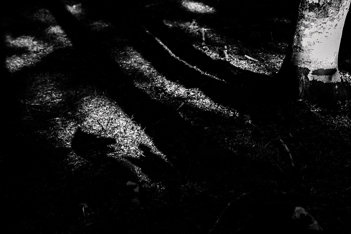 daniele-padovan-maschere-geometriche-animali_0011